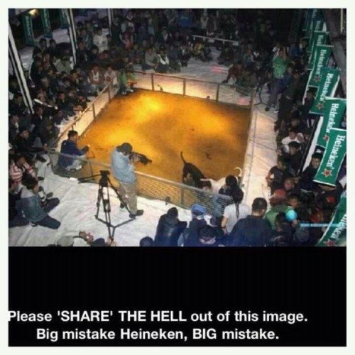 This makes me sick, #Heineken #dogfights #dogfighting #animalcruelty #animalabuse #dogs #sad #disgusting #share #repost #mistake