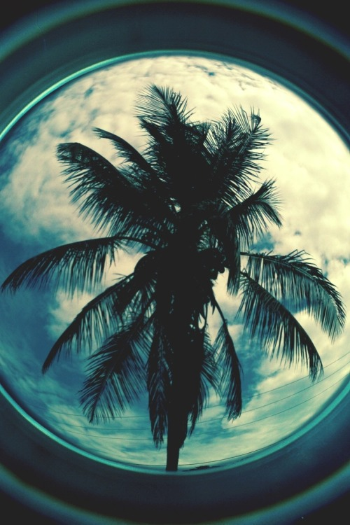 Dear palm tree,love you!