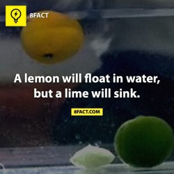 9gag:  🍋 Follow @8factapp to know what you don't know.