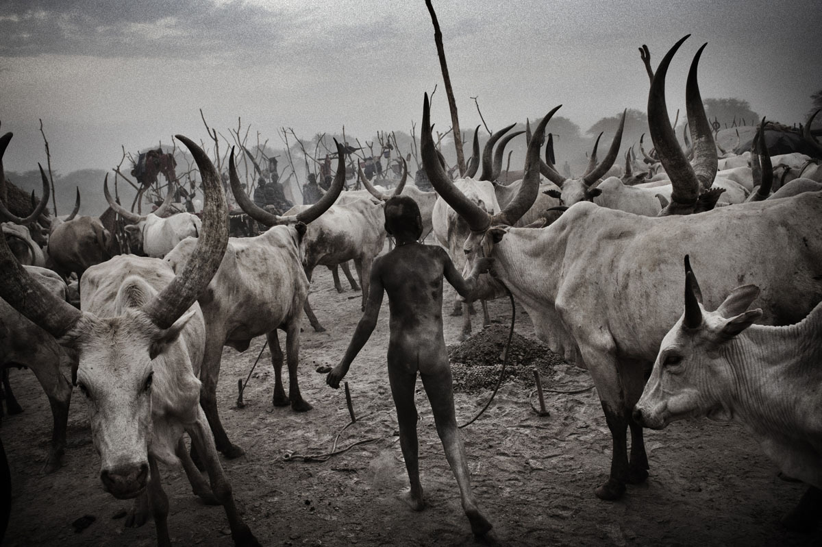 A Dinka boy among cattle, 2011. From south sudan : on the eve of independence [Credit : Francesco Zizola]