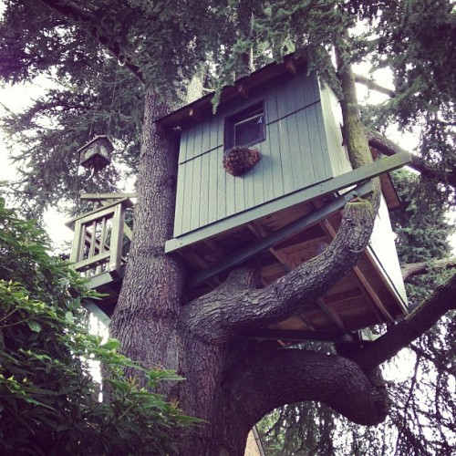 #treehouse when I was wild and small