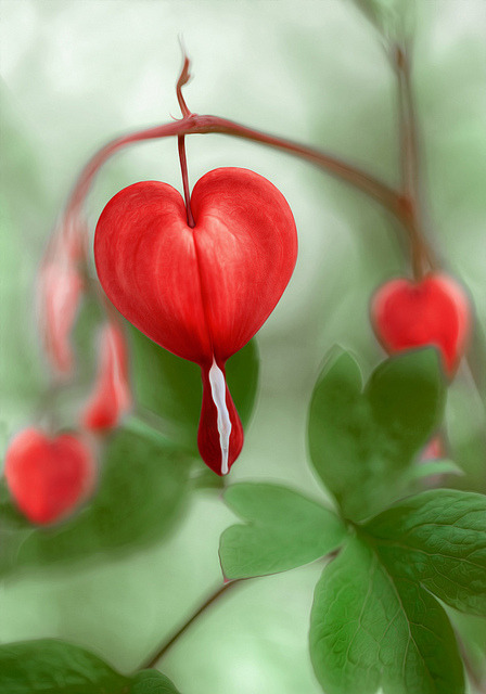 All you need is love by Mandy Disher Florals on Flickr.