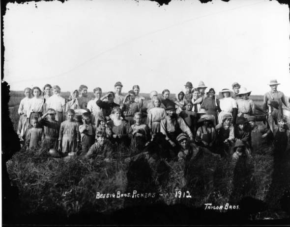 Cranberry pickers on Bessig Brothers Farm, 1912. Photo by Taylor Brothers of Adams County, Wisconsin. via: South Wood County Historical Corporation by way of Wetherby Cranberry Library