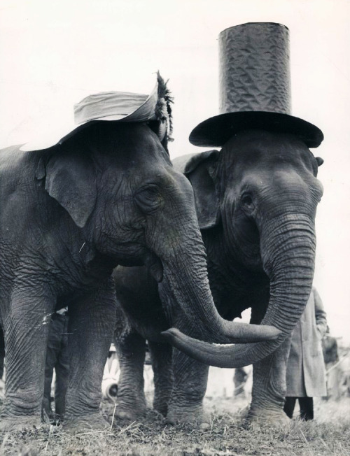 vintagegal:   Easter Elephants c. 1937  Wrinkley love!