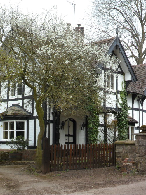 Cottage with Spring Blossom, Shifnal, Shropshire, England All Original Photography by http://vwcampervan-aldridge.tumblr.com
