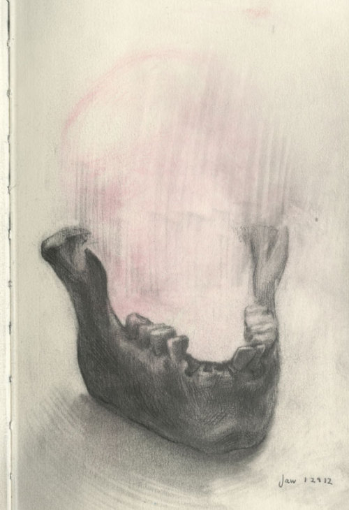 Jaw bone, page from one of my sketchbooks- graphite
