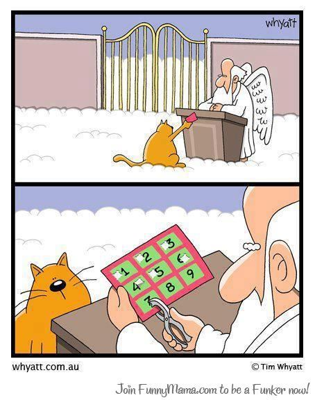 iamjmael:  Cat Have 9 Lives