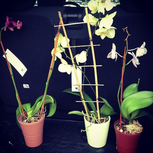 Some rescue orchids I am adding to my menagerie