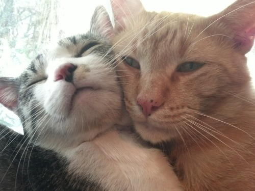 derpycats:  That kitty love.