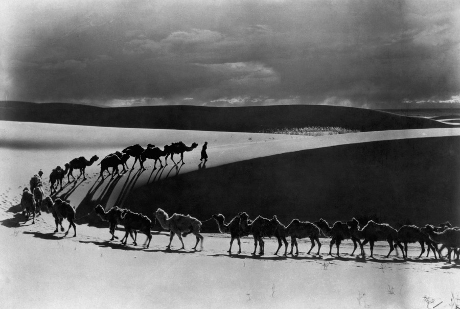 A camel caravan carries supplies for a scientific expedition in the Gobi Desert, June 1933