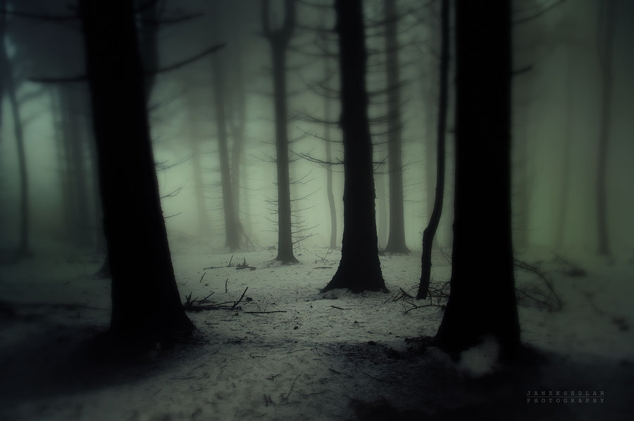 ominousplaces:  Dark forest, by Janek-Sedlar.