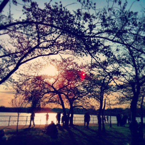 #cherryblossoms & #tourists #latergram  (at Tidal Basin)