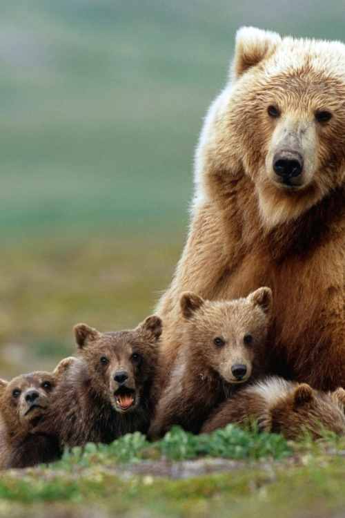 moon-kitties:  nature~astrology~spiritual☮   I love bears