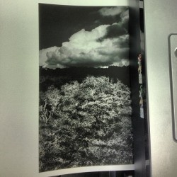 Printing some landscapes #landscape#blackandwhite#black#tree#nature#clouds#instagood #instagram