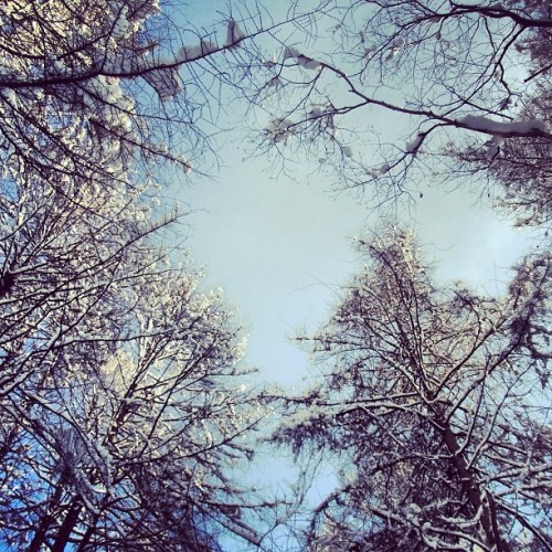 #japan #hokkaido #winter #sky #nature #tree #wood #instagood #iphonesia#iphoneonly #instagramhub #instamood #outdoors #beautiful #photooftheday #picoftheday#instadaily #bestoftheday #webstagram #instagramers #DiscoverNIPPON_mwjp  #mwjp