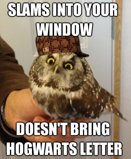 Damn you, scumbag owl