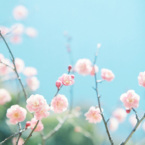 prettylittleflower:  untitled by shabon* on Flickr.