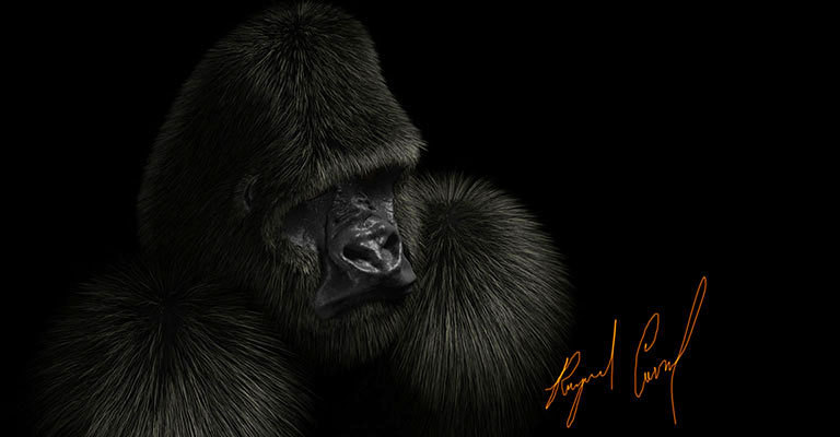 Gorilla Illustration created in Sculptris and Lightwave 11.5