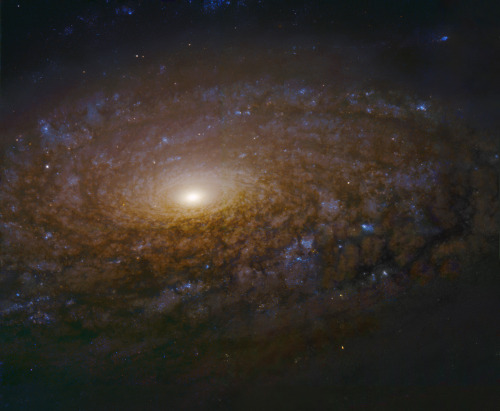 distant-traveller:  NGC 3521 close up  Gorgeous spiral galaxy NGC 3521 is a mere 35 million light-years distant, toward the constellation Leo. Spanning some 50,000 light-years, its central region is shown in this dramatic image, constructed from data drawn from the Hubble Legacy Archive. The close-up view highlights this galaxy's characteristic multiple, patchy, irregular spiral arms laced with dust and clusters of young, blue stars. In contrast, many other spirals exhibit grand, sweeping arms. A relatively bright galaxy in planet Earth's sky, NGC 3521 is easily visible in small telescopes, but often overlooked by amateur imagers in favor of other Leo spiral galaxies, like M66 and M65.  Image credit: Hubble Legacy Archive, ESA, NASA