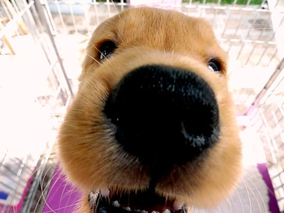 leicaarollingstone:  Hi, I'm Dog! Nice camera!