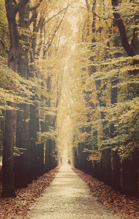 travelingcolors:  Magical Forest, Bruges | Belgium (by Mathijs Delva)