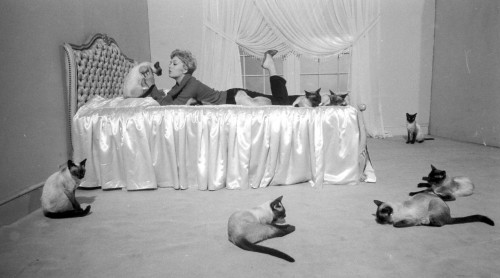 vintageshopgirl:  Happy Caturday!