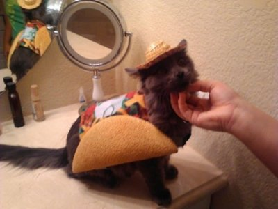 unimpressedcats:  taco cat is taco cat spelt backwards