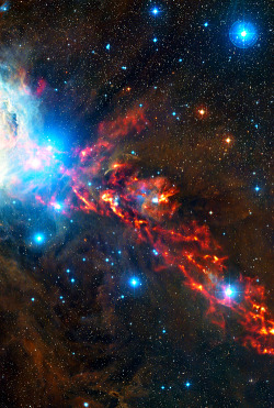 weareallstarstuff:  Star Formation In Orion Nebula