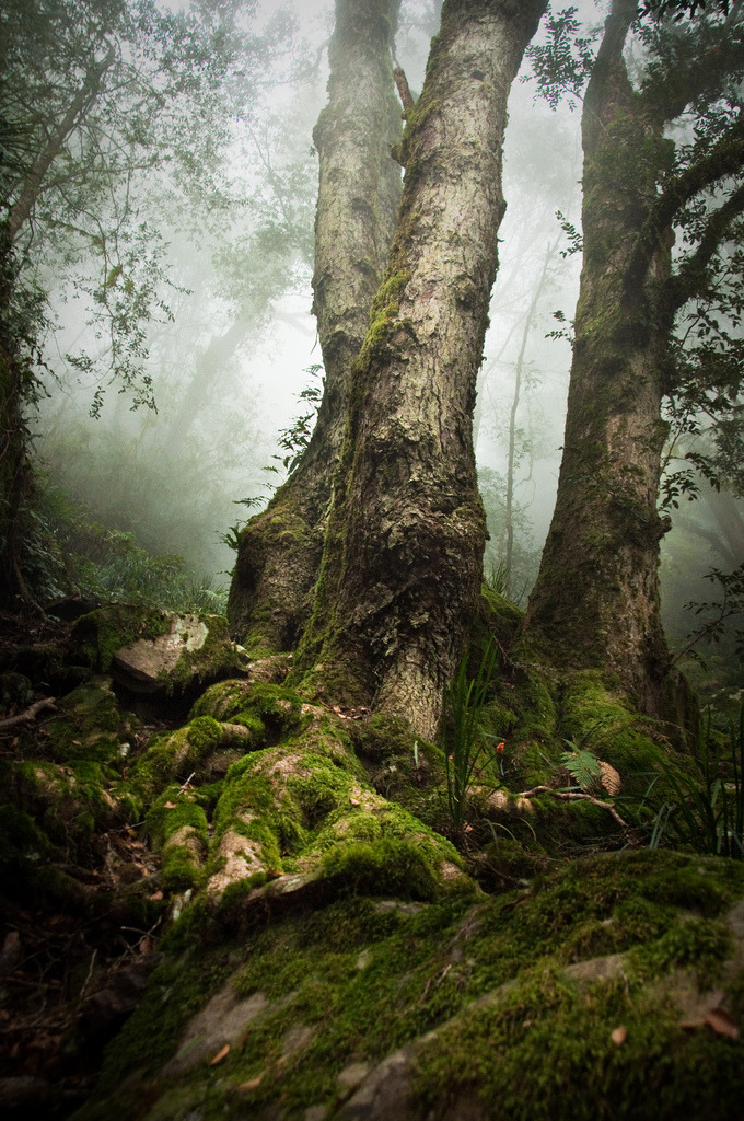 mystic-revelations:  Roots (by hlambrose)