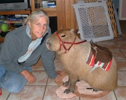 powerburial:  sexhaver:  is that ellen degeneres  i think its a capybara