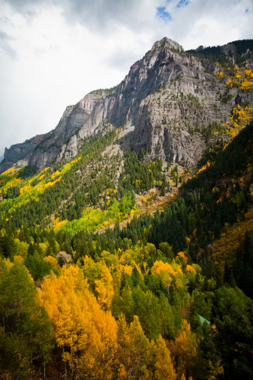 4nimalparty:  Golden and Green Autumn Foliage in Yankee Boy Basin (by Bridget Calip)