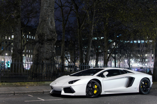 alexpenfold:  Nighttime Bull. on Flickr.