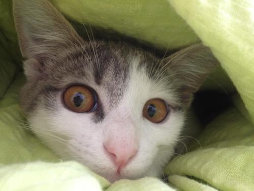 Preety eyes. Source: hgasparic on catpictures. #cats#cute cats#cat#aww