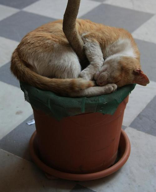 llbwwb:  Sweet Dreams and Cuddles Wonderful Friends:) Flowerpot Cat by Roberto Buttura .