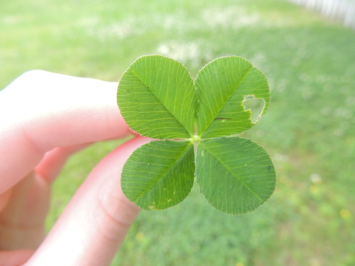 obeylittlethings:  we found a 4 leaf clover :OO