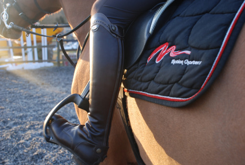 watson-showjumper:  Equiclass boots, prestige saddle and stirrups, sponsor - motion charters