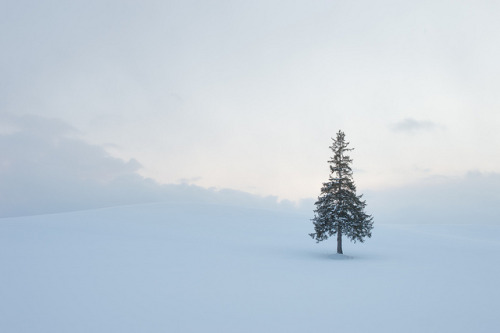 Up in Snow by cine-paranoia on Flickr.
