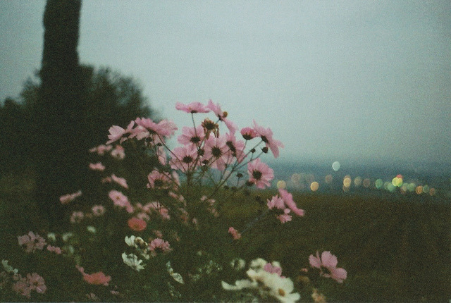 orbitae:  untitled by .orphin on Flickr.