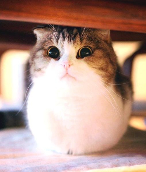 watermelon-burd:  rendigo:  oh my god how are you real  Cannot tell if cat or guinea pig.