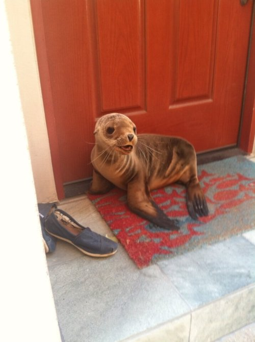 I live by the beach and this little guy just popped by for a visit - Imgur