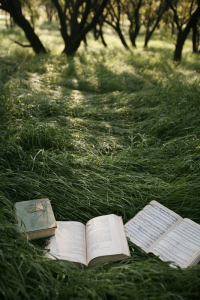 euphoricspirit:  ' Reading in the grass fields, so i can sink further into the ground with every perfectly spun phrase and beautiful word.'