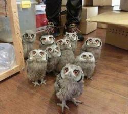 Who Let The Owls Out? Who? Who? lol!