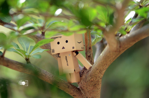 Danbo goes green on Flickr.My danbo
