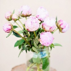 Pink flowers for good mood #peonies #pink #spring #nature #mood #happy #joy #inspiration