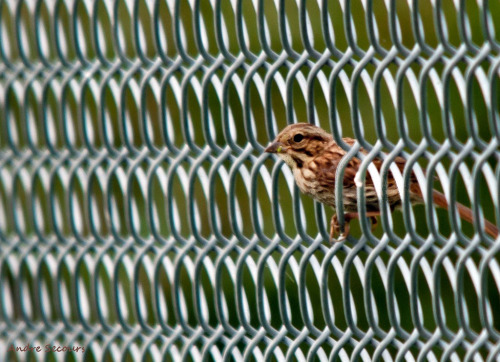Fenced in,by  Andre@home   (via All sizes | Fenced in | Flickr - Photo Sharing!)