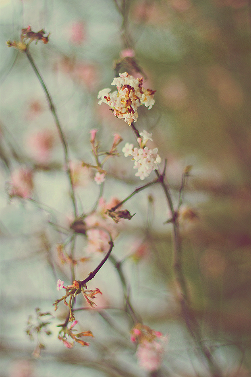 hellanne:  Blossom (by purpleface)