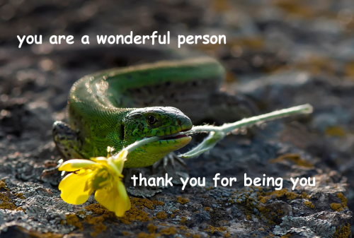 birdhug:  lizard friend 4 u all