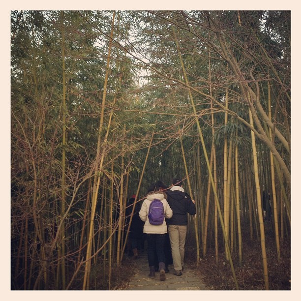 Into the bamboo groove, Yangzhou, China.