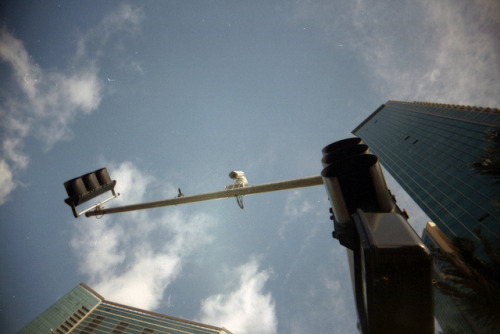 25 on Flickr.The eye in the sky. White Slim Angel. Fuji 100. 35mm.