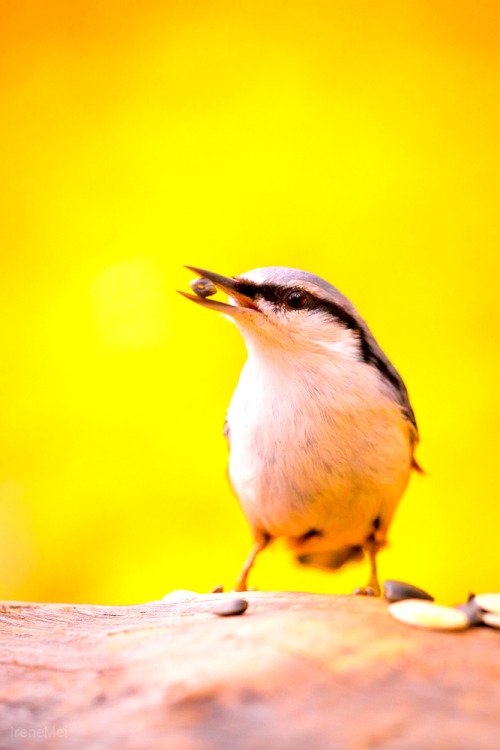 imalikshake:  On Yellow by Emyan on Flickr.
